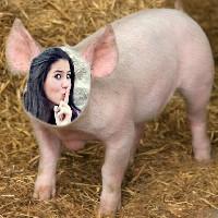 fotomontagem-porquinho
