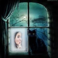 janela-gato-preto