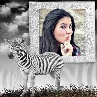 montagem-de-foto-com-zebra
