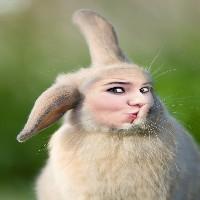 fotomontagem-coelho