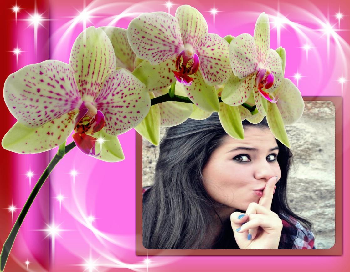 Montagem de Fotos | Flores | Montagem de Fotos com Orquideas