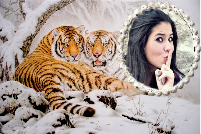 montagem-online-com-tigres